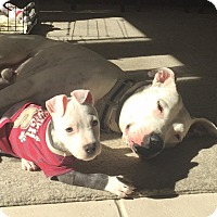 Adopt A Pet :: Trip - Atlanta, GA