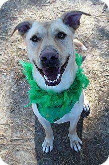 Labrador Retriever Mix Dog for adoption in Murphysboro, Illinois - Hero