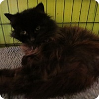Adopt A Pet :: Minnie Pearl - Coos Bay, OR