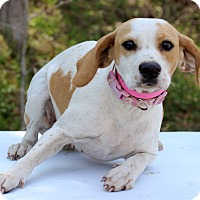 Adopt A Pet :: Canada - Waldorf, MD