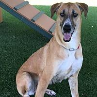 Adopt A Pet :: 'CARA' - Agoura Hills, CA