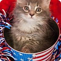 Adopt A Pet :: Olympia - Muskegon, MI