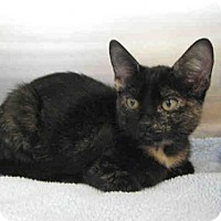 Adopt A Pet :: *EVELYNNE - Norco, CA