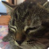 Adopt A Pet :: Elsie - Flushing, MI