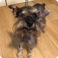 Adopt A Pet :: Hobbes - Redondo Beach, CA