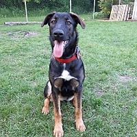 Adopt A Pet :: DAPHNE - Oakbank, MB