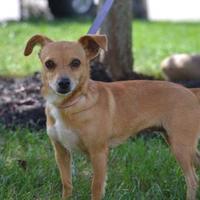 Adopt A Pet :: Dailey - Fairfield, OH