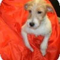 Adopt A Pet :: Junior - Antioch, IL