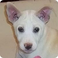 Adopt A Pet :: Waneta - Allentown, PA