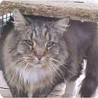 Adopt A Pet :: Misty - Lunenburg, MA
