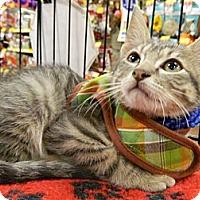 Adopt A Pet :: Shiloh - The Colony, TX