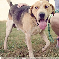 Adopt A Pet :: Clooney - Kingsport, TN