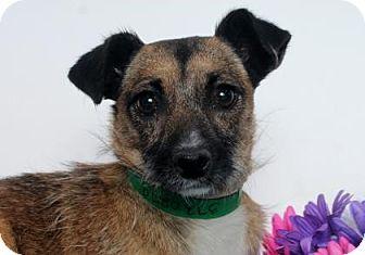 Chihuahua Mix Dog for adoption in Meridian, Idaho - Sari