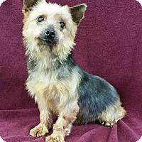 Adopt A Pet :: Marcy Miller - Urbana, OH