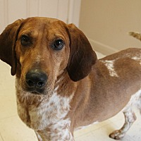 Adopt A Pet :: Elmo - Southington, CT