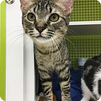 Adopt A Pet :: Thomas - Spring, TX