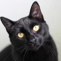 Adopt A Pet :: Earl - Manteo, NC