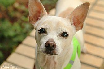 Chihuahua Mix Dog for adoption in Portland, Oregon - Slim Shady