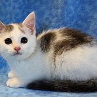 Adopt A Pet :: Finn - Greensboro, NC