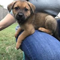 Adopt A Pet :: Josephine - Scottsdale, AZ