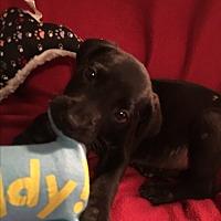 Adopt A Pet :: MARLEY - Cranston, RI