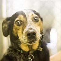 Adopt A Pet :: Mason - Mountain Home, AR