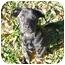 Photo 2 - Boxer/Labrador Retriever Mix Puppy for adoption in Tallahassee, Florida - Ruth