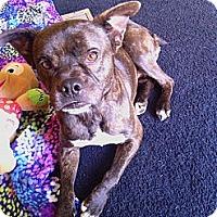 Adopt A Pet :: Rocky - MAIDEN, NC