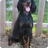 Adopt A Pet :: Zoey - DeKalb, IL