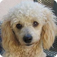 Adopt A Pet :: Jazzy - La Costa, CA