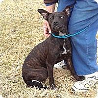 Adopt A Pet :: # 088-14 @ Animal Shelter - Zanesville, OH