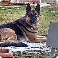 Adopt A Pet :: Ellie - Hamilton, MT