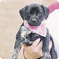 Adopt A Pet :: Tippy - Kingwood, TX