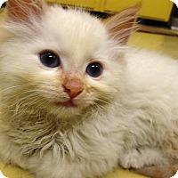 Adopt A Pet :: Bosley - Delmont, PA
