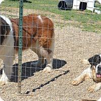 Adopt A Pet :: Barney - Prole, IA