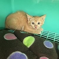 Adopt A Pet :: Sunny - California City, CA