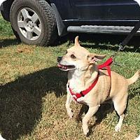 Adopt A Pet :: Popsie - Comanche, TX