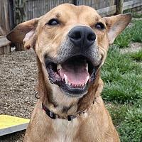 Adopt A Pet :: Brett - Wilmington, OH