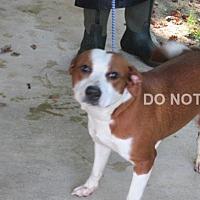 Adopt A Pet :: Cookie - Rocky Mount, NC