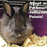 Adopt A Pet :: ASHLEY - Fort Wayne, IN
