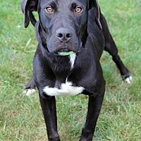 Adopt A Pet :: Phoenix - Harrison, NY