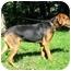 Photo 4 - Hound (Unknown Type)/German Shepherd Dog Mix Dog for adoption in Jacksonville, Florida - Meg