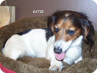 Dachshund Dog for adoption in Salem, Oregon - Katie