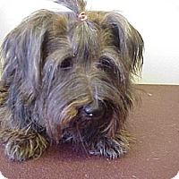 Adopt A Pet :: SIDNEY - Cathedral City, CA