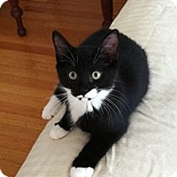 Adopt A Pet :: Minnie - Jenkintown, PA