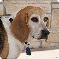 Adopt A Pet :: Sophie - Newcastle, OK