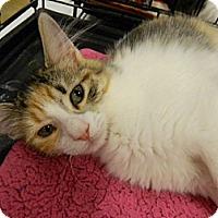 Adopt A Pet :: Duchess - The Colony, TX
