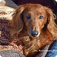 Adopt A Pet :: Scamper - in Maine - kennebunkport, ME