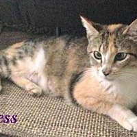Adopt A Pet :: Princess-Female-SPONSORED ADOPTION FREE - Knoxville, TN