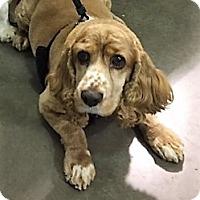 Adopt A Pet :: Holly-ADOPTION PENDING - Sacramento, CA